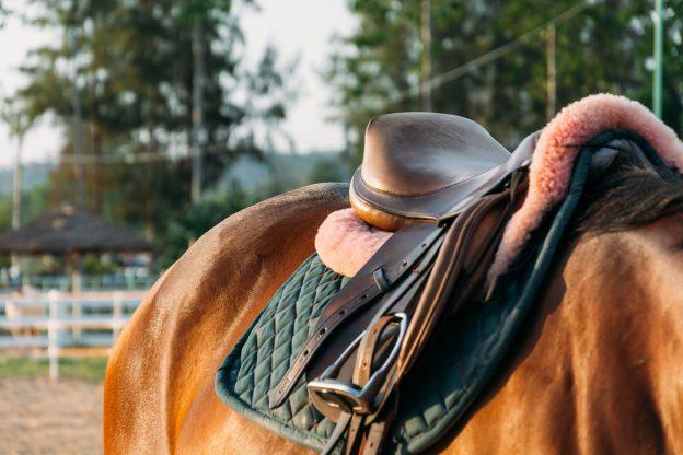 saddle on horse's back